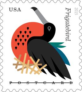 coastal_frigatebird