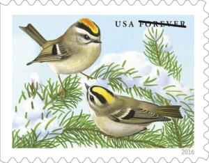 songbirds_kinglet