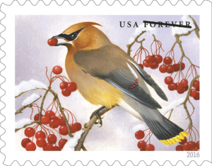 songbirds_waxwing