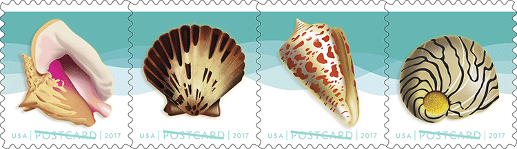 s_seashells