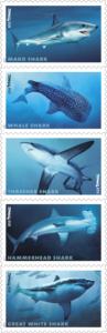 s_sharks